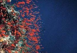 Deep Blue: Korallenriff