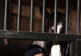 Das Pferd auf dem Balkon - Zwei sind einer zu viel:...eng.